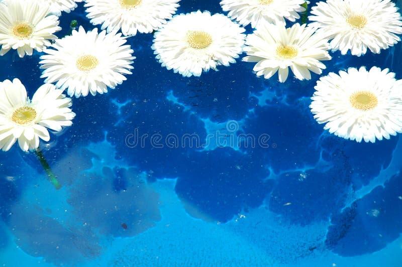 Wasserblumen stockbild