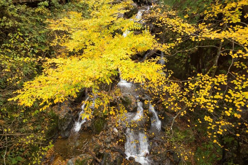 Wasserfälle im Herbst stockfotos