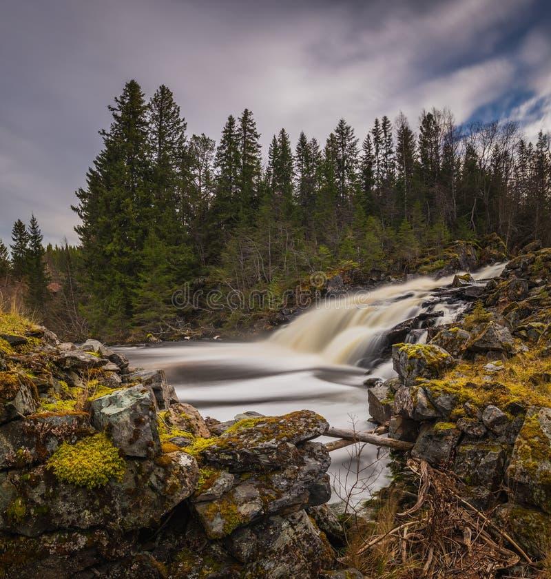 Wasserfall auf dem Fluss in der nördlichen, norwegischen Waldherbstzeit stockbild