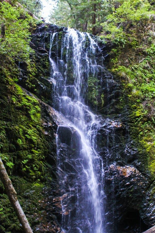 Wasserfall in den Rothölzern lizenzfreie stockbilder