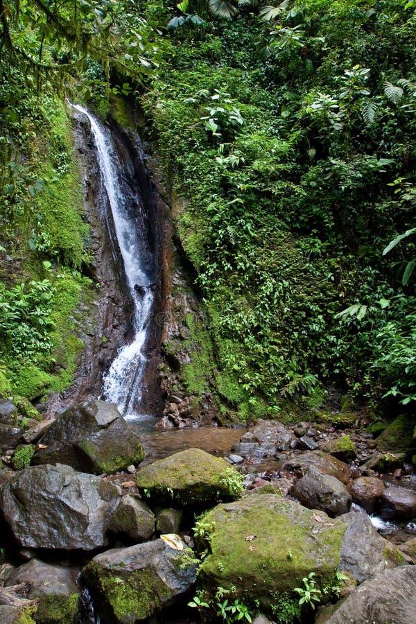 Wasserfall in den tropischen Wald stockbild