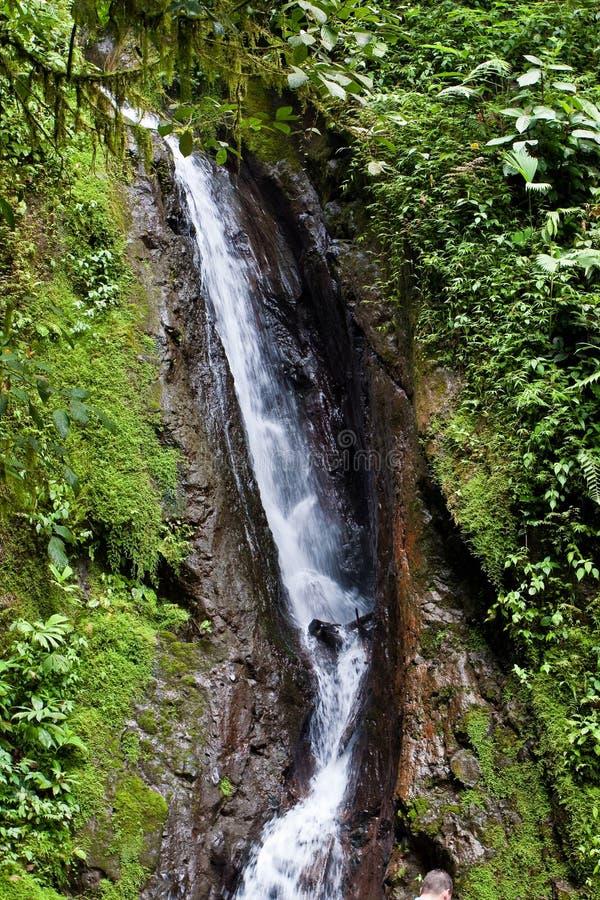 Wasserfall in den tropischen Wald lizenzfreies stockfoto