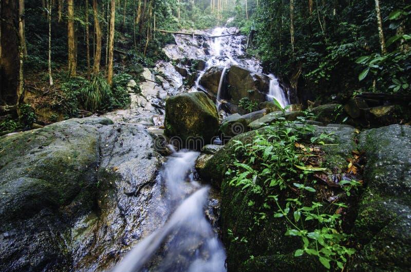 Wasserfall des tropischen Regenwaldes mit umgeben durch üppiges Laub und grünen moosigen Felsen lizenzfreie stockfotografie