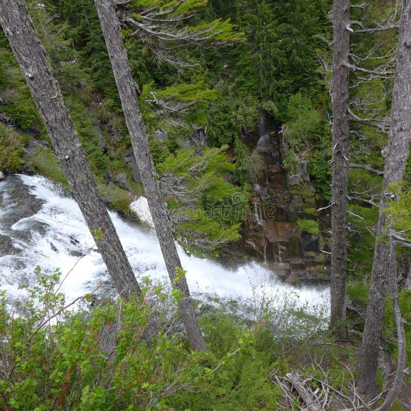 Wasserfall in einem immergrünen Wald stockfotografie