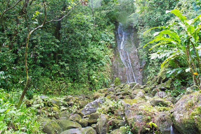 Wasserfall in einem Regenwald stockfotografie
