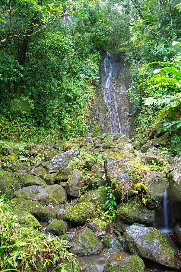 Wasserfall in einem Regenwald lizenzfreies stockbild