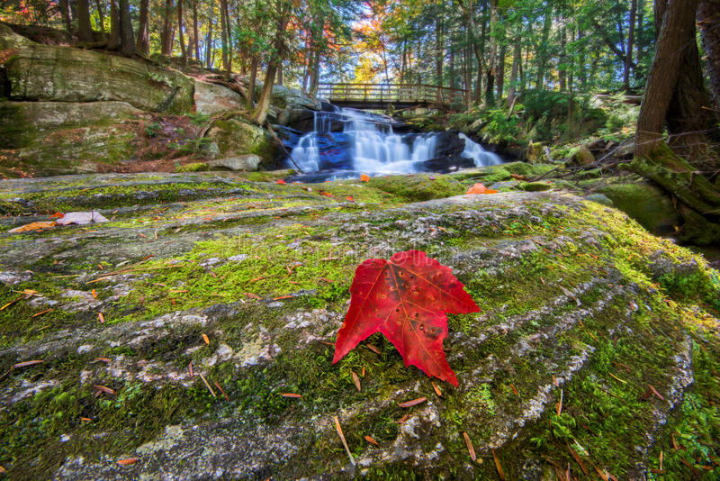 Wasserfall-Hintergrund mit Rotahorn-Blatt auf Felsen lizenzfreie stockfotos