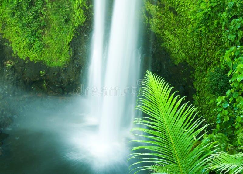 Wasserfall im Djungle von Samoa stockbild