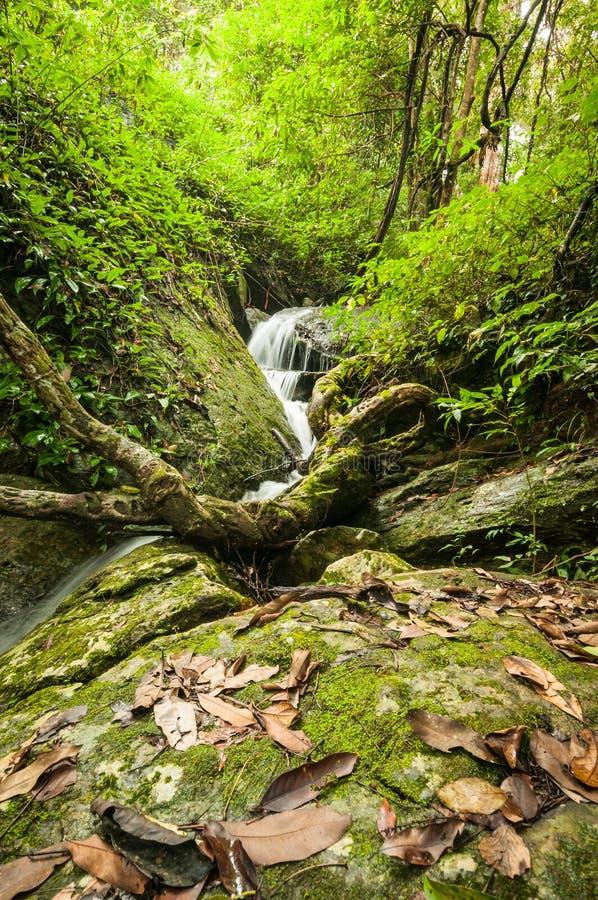 Wasserfall im Wald stockfotografie