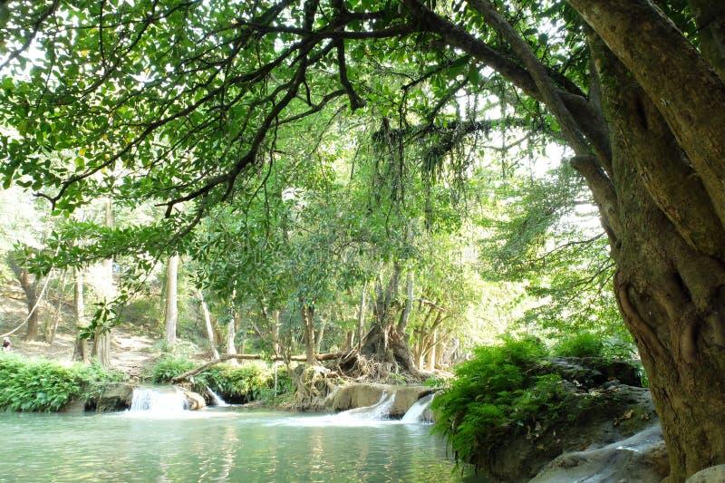 Wasserfall im Wald, Thailand stockbilder