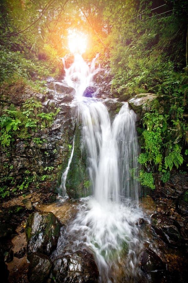 Wasserfall im Wald von lizenzfreie stockbilder
