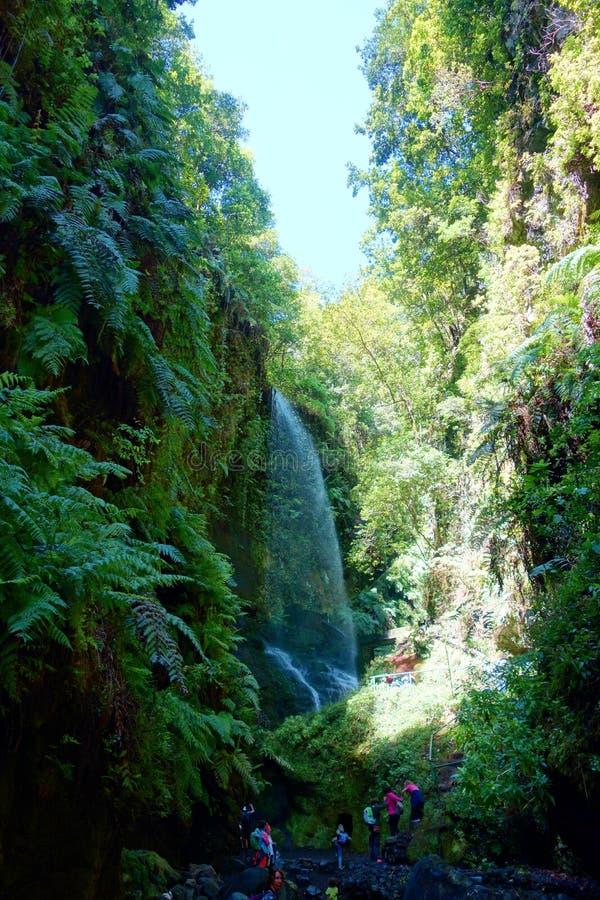 Wasserfall Los Tilos im Naturreservat umfasst größtenteils durch Lorbeerwald im La Palma, Kanarische Inseln, Spanien stockbild