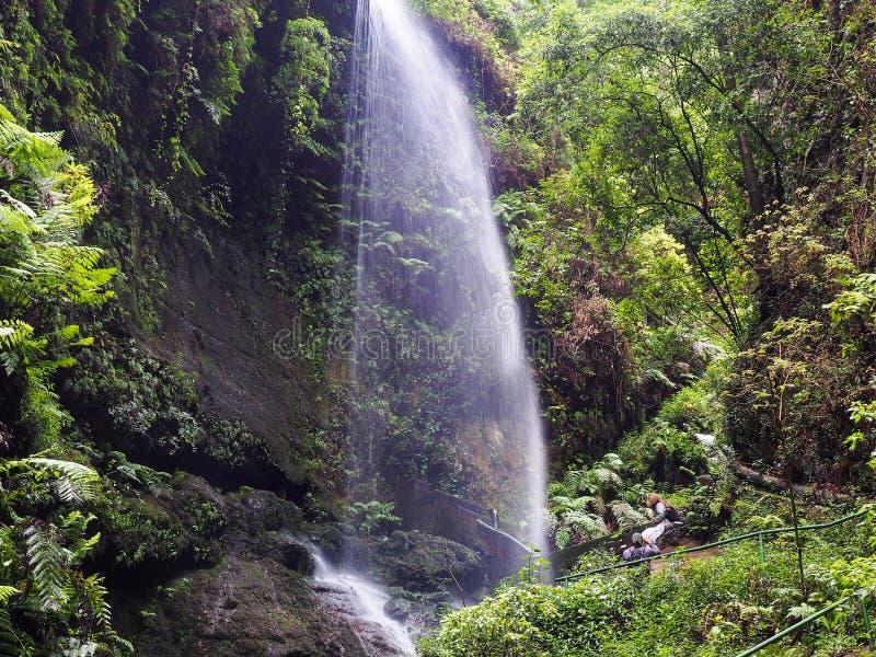 Wasserfall mitten in dem kanarischen Dschungel auf La Palma, eine Kanarische Insel stockbilder