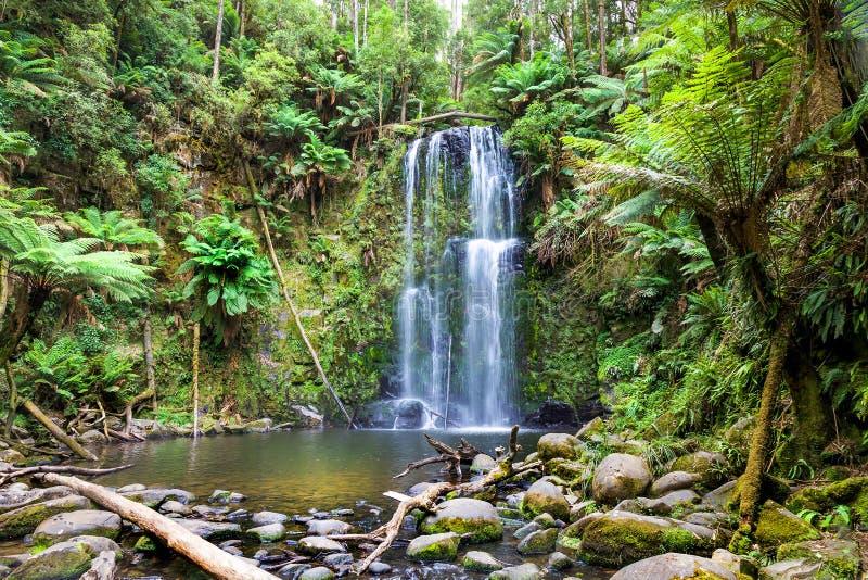 Wasserfall Tasmanien stockfoto