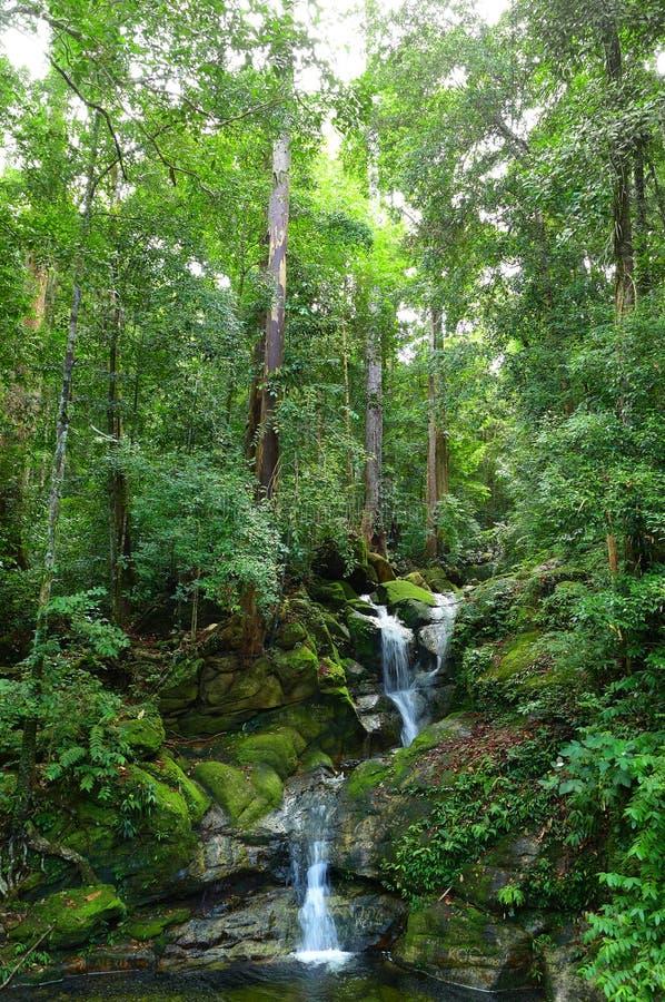 Wasserfall in tropischen Borneo-Regenwäldern stockbilder