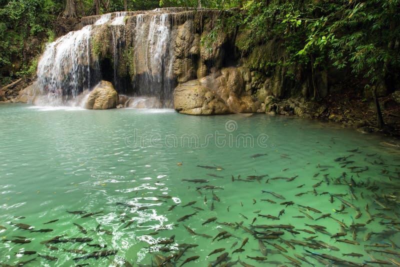 Wasserfall und Fische stockbilder
