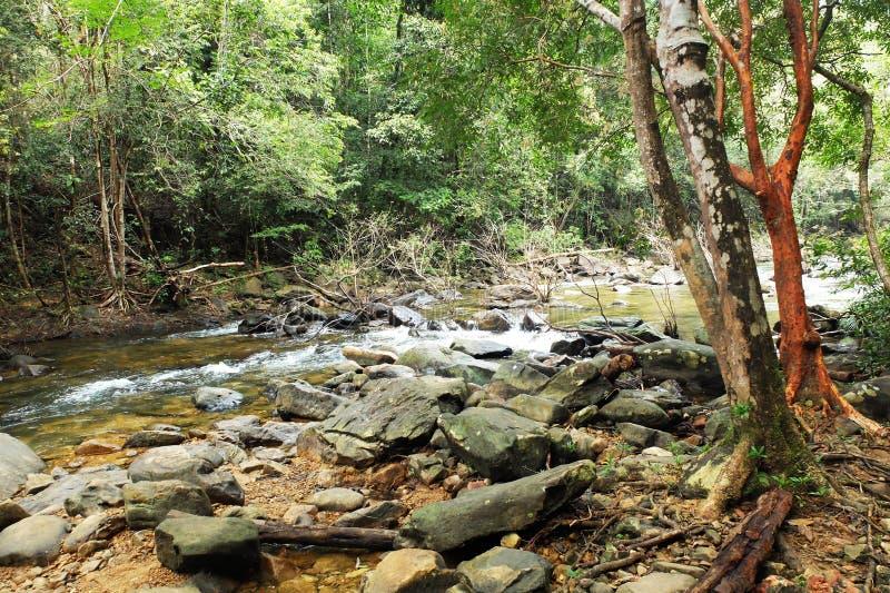 Wasserfall und viele Stein im Wald stockbild