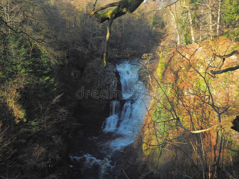 Wasserfall unter Bäumen stockbild