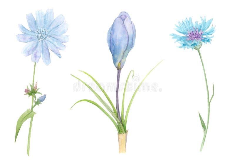 satz wiesenblumen stock abbildung illustration von