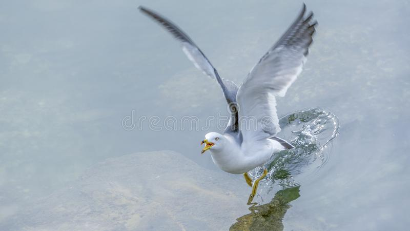 Wasserflügel lizenzfreie stockfotos
