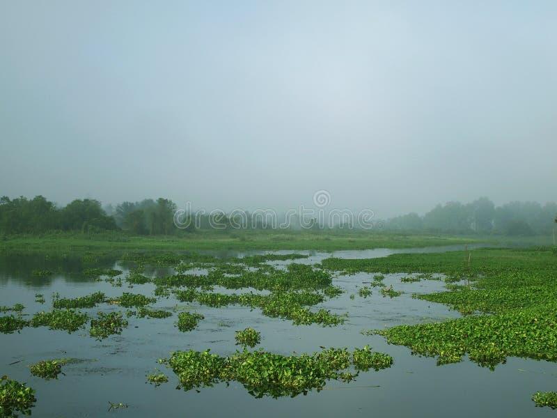 Wassergefüllte Hyazinthen morgens. lizenzfreie stockfotos