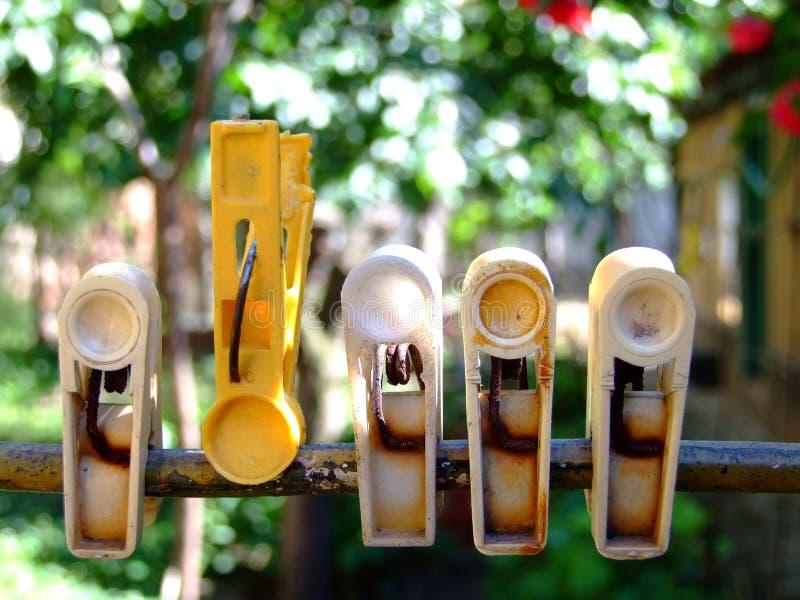 Wasserijklemmen in de tuin royalty-vrije stock fotografie