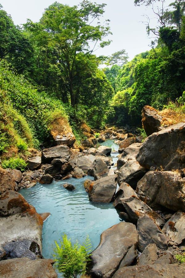 Wasserknarren Im Tropischen Wald Stockfotos