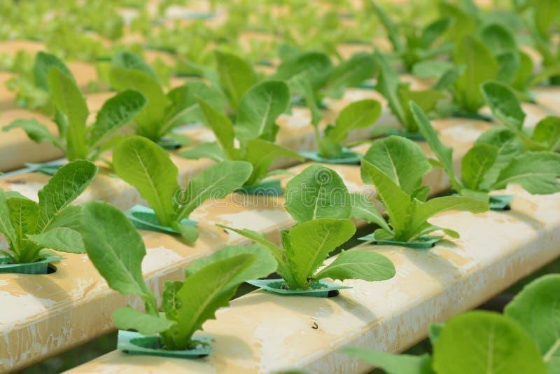 Wasserkulturanlagen im Gemüsegartenbauernhof stockbild