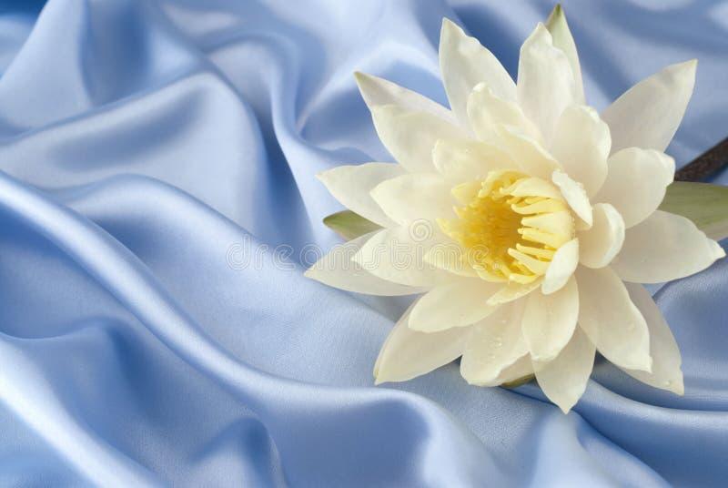 Wasserlilie auf blauem Satin lizenzfreie stockbilder