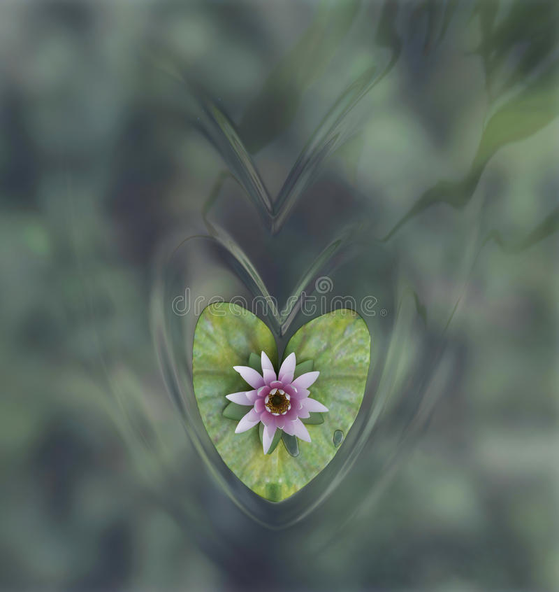 Wasserlilienblume lizenzfreies stockfoto