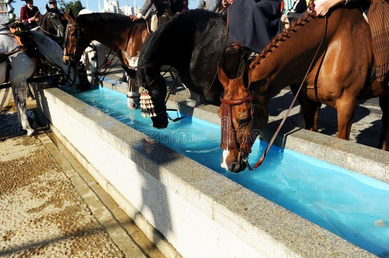 Wassermast für Pferde, Spanien lizenzfreies stockbild
