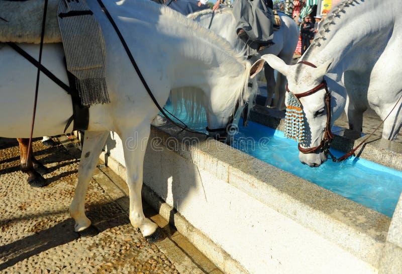 Wassermast für Pferde, Spanien lizenzfreie stockbilder