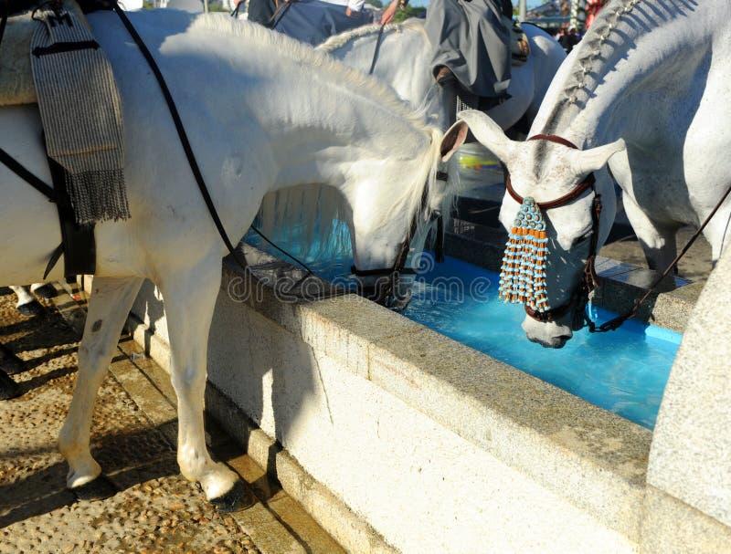 Wassermast für Pferde, Spanien stockfotografie
