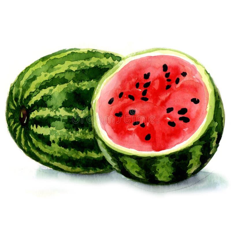 Wassermelone. Aquarellillustration stock abbildung
