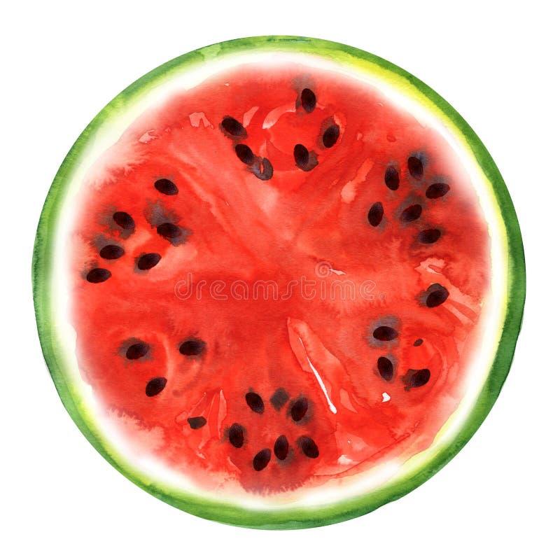 Wassermelone getrennt auf weißem Hintergrund lizenzfreie abbildung