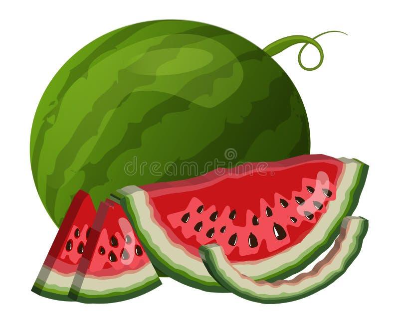 Wassermelone und Scheibennahaufnahme Vektor lokalisierte Illustration stockbilder