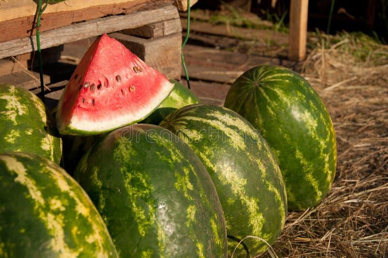 Wassermelonen lizenzfreie stockfotos