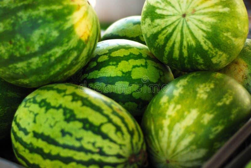 Wassermelonen stockfoto