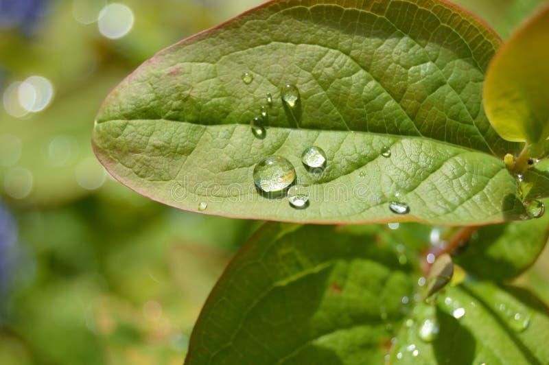 Wasserperlen auf einem Blatt stockbilder