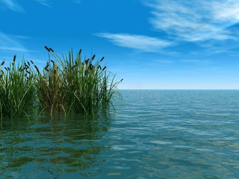 Wasserpflanzen vektor abbildung