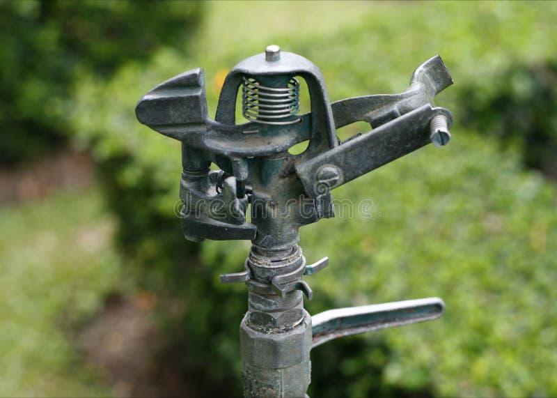 Wasserspringer lizenzfreie stockfotografie