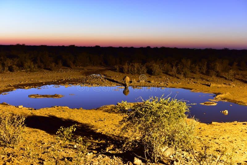 Wasserstelle - Etosha, Namibia stockfotografie