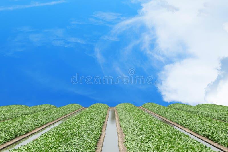 Wasserströme mitten in dem Rahmen mit anderen und Gemüse stockfoto