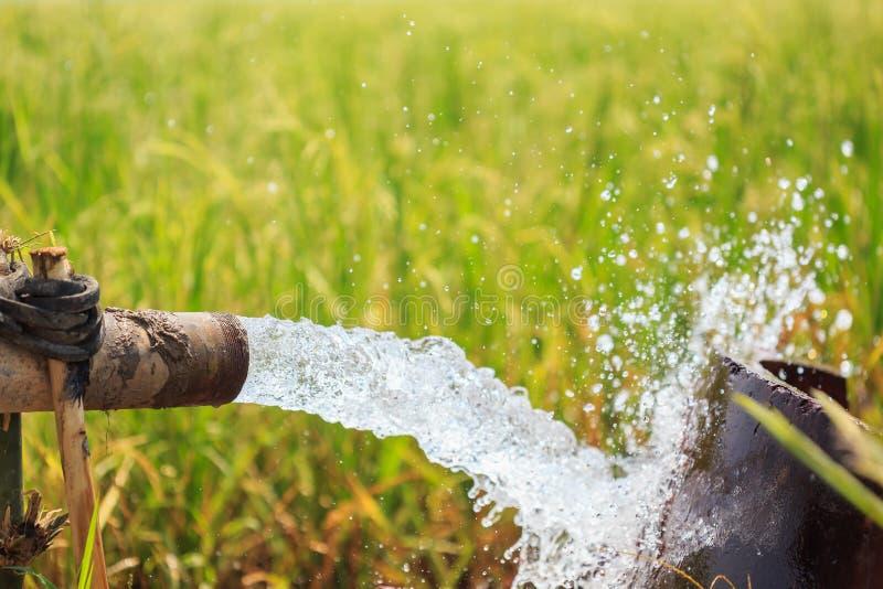 Wasserstrom vom großen Pumpenrohr auf dem Reisgebiet in der Zentrale von thailändischem lizenzfreie stockbilder