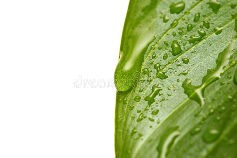 Wassertröpfchen auf Blatt stockfoto
