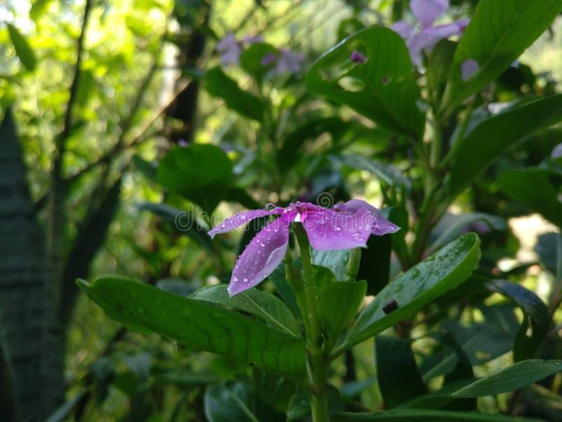 Wassertröpfchen auf Blume lizenzfreies stockfoto