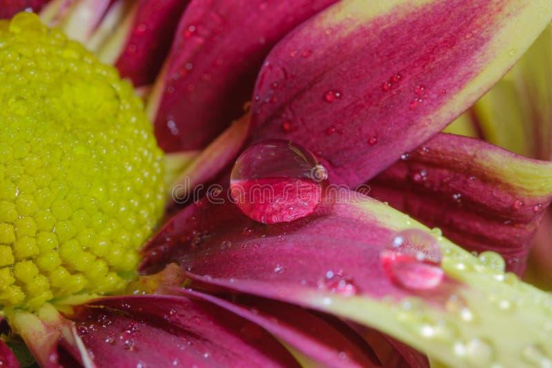 Wassertröpfchen auf den Blumenblättern. stockfoto