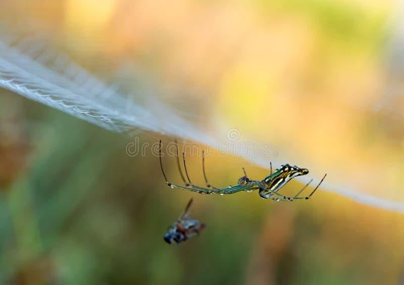 Wassertr?pfchen auf einem Spinnennetz in der Natur lizenzfreies stockbild