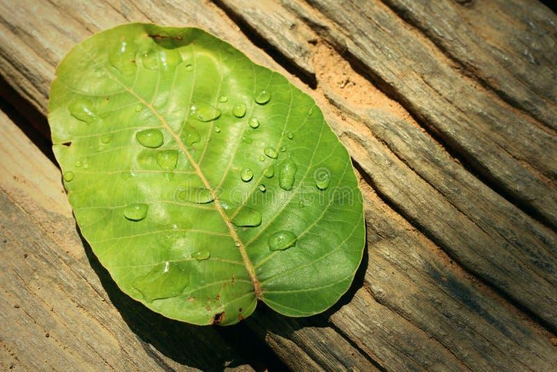 Wassertropfen auf Blättern stockbilder