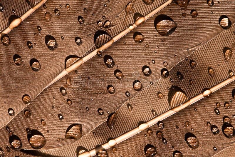 Wassertropfen auf einer Feder des Vogels lizenzfreie stockbilder
